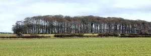 Roseacre wood